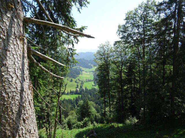Zinggengraben